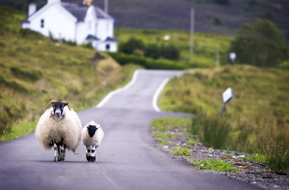 Irish Law On Stray Animals On Roadways